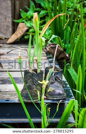 ornamental plants on old shoes