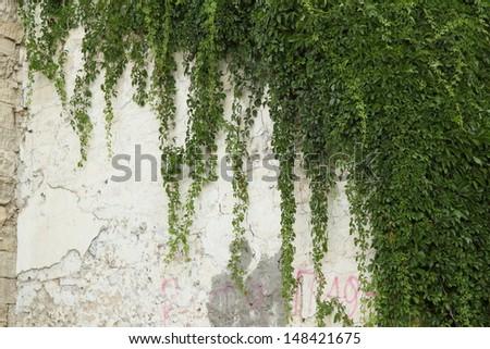 Ornamental plants on wall - stock photo