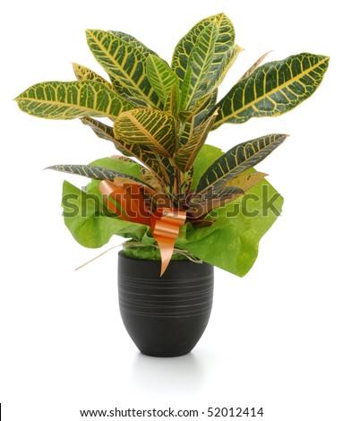 Ornamental Plants over white background - stock photo