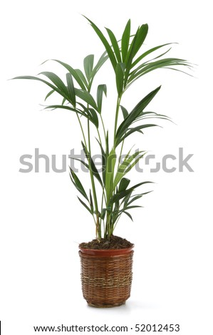 Ornamental Plants over white background - stock photo