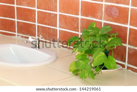 ornamental plants with basins - stock photo