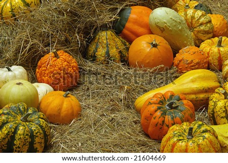 ornamental pumkin - stock photo