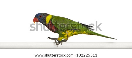 Ornate Lorikeet, Trichoglossus ornatus, a parrot, perching in front of white background - stock photo
