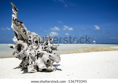 Ornate piece of driftwood on a deserted beach in the Meemu Atoll, Maldives. Blue sky, white sand and clear warm water. - stock photo
