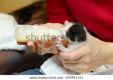 orphan kitten drinking milk from little bottle - stock photo