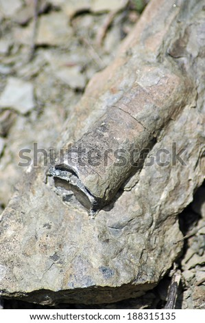 Orthoceras neptunen Silurian - stock photo