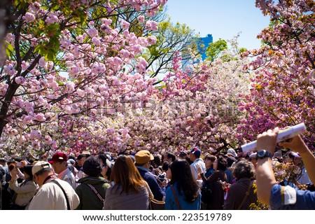 OSAKA APRIL 14: Tourists enjoy the cherry blossom at Osaka Mint Bureau's park, Osaka, Japan on April 14, 2014. - stock photo