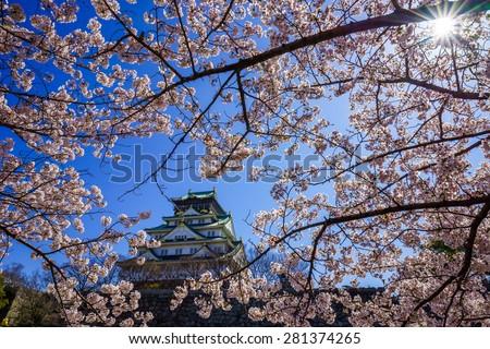 Osaka castle in cherry blossom season, Osaka, Japan - stock photo