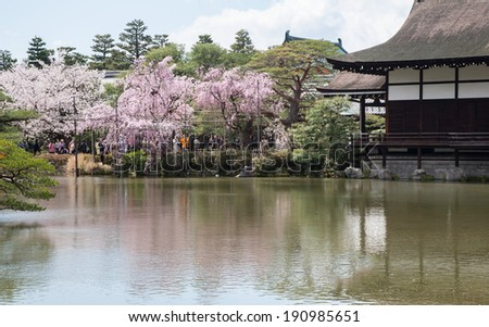 OSAKA, JAPAN - APRIL 04, 2014: Cherry blossom in Osaka.