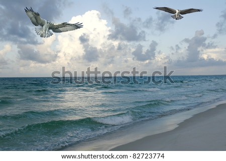 Osprey Fishing at the Beach at Sunrise - stock photo