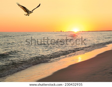 Osprey Flies in From Unsuccessful Fishing Trip as the Sun Sets at the Beach - stock photo