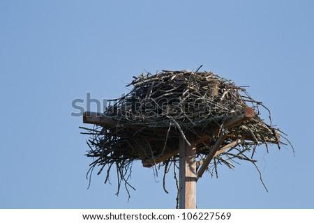 Osprey's nest. - stock photo
