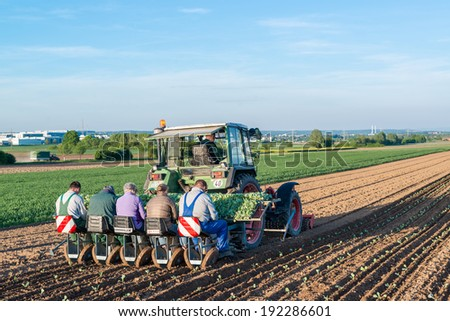 OSTFILDERN-SCHARNHAUSEN, GERMANY - MAY 5, 2014: Several people feeding young salad plants into machinery at the back of a tractor on May, 5, 2014 in Ostfildern-Scharnhausen near Stuttgart, Germany. - stock photo