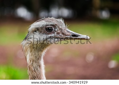 Ostrich bird head up close profile side view - stock photo