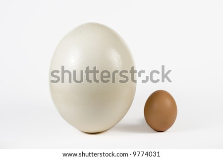 Ostrich egg and hen egg. The size comparing. - stock photo