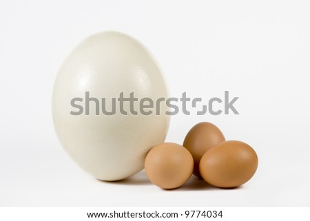 Ostrich egg and hen eggs. The size comparing. - stock photo