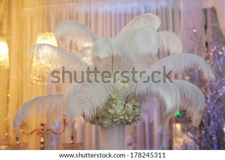 Ostrich feathers in a vase as a decoration - stock photo
