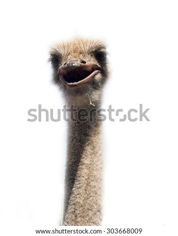 Ostrich head close up isolated on white - stock photo