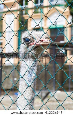 Ostrich in the zoo behind bars - stock photo