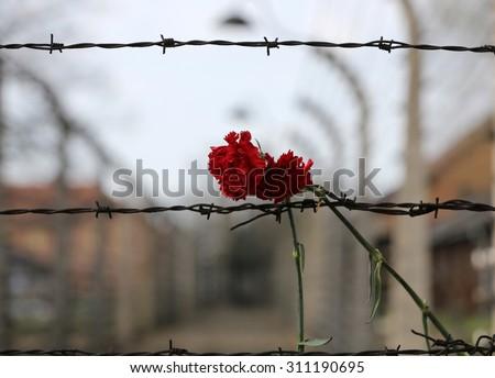 OSWIECIM, POLAND - APRIL 16, 2015: Electric fence in former Nazi concentration camp Auschwitz I, Poland - stock photo