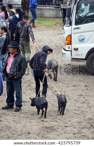 OTAVALO, ECUADOR - MARCH 5, 2016: Man in a hoodie leading two pigs on a leash in the Otavalo Animal Market