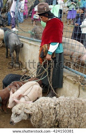 OTAVALO, ECUADOR - MARCH 5, 2016: Woman with sheep and pigs in the Otavalo Animal Market