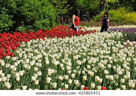 Ottawa, Canada - May 23, 2016: Tourists attending Tulips Festival in Ottawa taking pictures making the beautiful and radiant tulips as their background. - stock photo