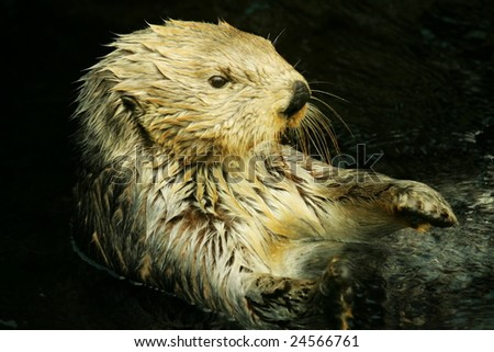 Otter - stock photo