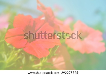 out of focus flower on vintage background - stock photo