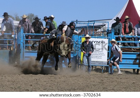 Out of the Chute - stock photo
