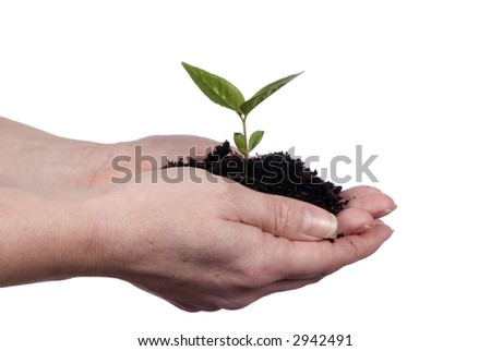 Out stretched hands hold a new seedling for spring planting. Isolated on white. Growth, life, beginnings.