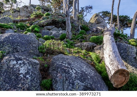 Outcropping of rocks, Cypress trees & cut tree / log, at Point Lobos State Natural Reserve, along the rugged Big Sur coastline, near Carmel and Monterey, CA. on the California Central Coast. - stock photo