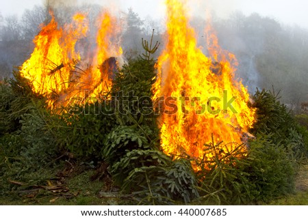 Outdoor burning fire and open flame on Fir Trees - stock photo