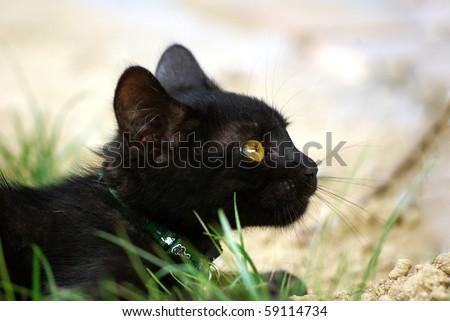 Outdoor cat - 13-weeks-old - stock photo