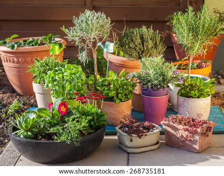 Outdoor flower pots for small garden, patio or terrace - stock photo