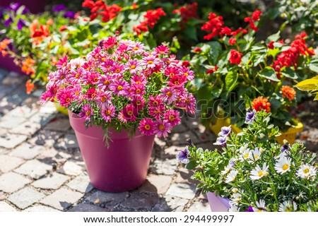 outdoor flower pots for small garden patio or terrace - Outdoor Flower Pots