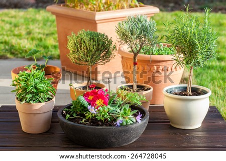 Outdoor flower pots  with herbs and flowers for small garden - stock photo