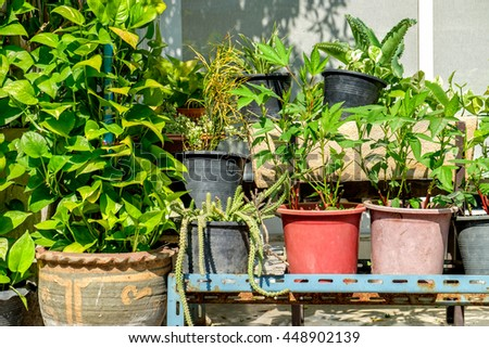 Outdoor flower pots with tropical succulent plants. Streets of Bangkok with flowers, Thailand. - stock photo