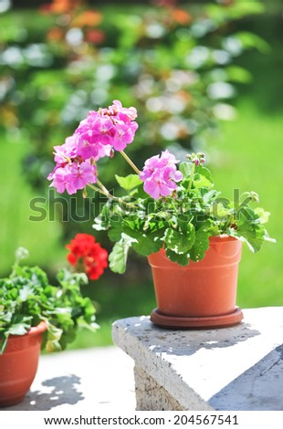 Outdoor flowerpot. Pink and red flowers in pots on ledge. - stock photo