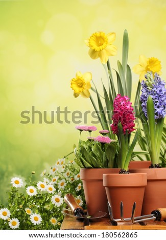 Outdoor gardening tools and flowers - stock photo