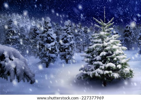 Outdoor night shot of a nice fir tree in thick snow, for the perfect Christmas mood - stock photo