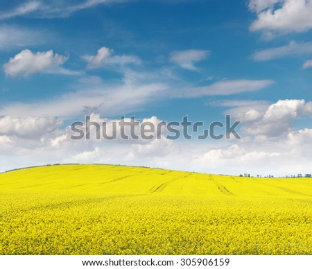 Outdoor photo of canola agricultural field and blue sky. - stock photo