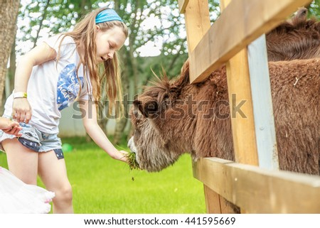 outdoor portrait of young happy young girl feeding donkey on farm - stock photo