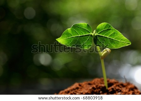 Outdoor young plant  in sunlight. - stock photo