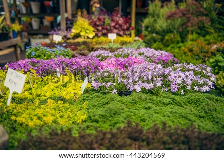 Outdoors Flowers and plants market in Brooklyn, New York - stock photo