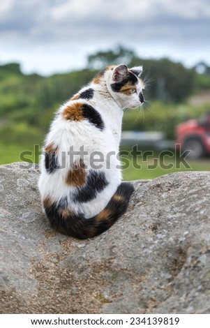 Outdoors portrait of domestic cat. Color image. A sitting mixed-breed cat prowling on a rock. - stock photo