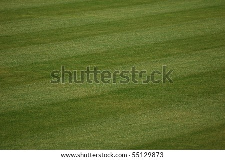 Outfield Grass - stock photo