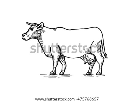 Outline Illustration Cow 475768657 also Deli additionally Royalty Free Stock Photo Beef Chart Image23661765 furthermore Cow Parts Diagram further How To Buy Beef. on cuts of steak chart