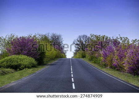 Outside urban roads along which lilacs bloom and grow green grass - stock photo