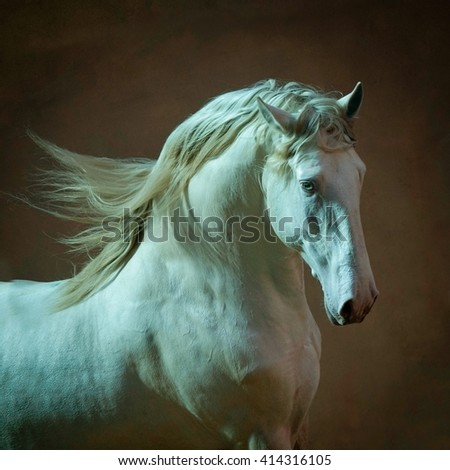 Outstanding Lusitano stallion portrait in soft lights - stock photo